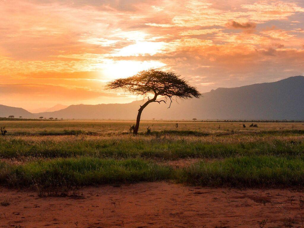 Heimsafari: Der Schatz der Ahnen