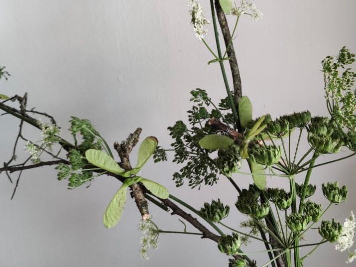 Libellen und Schmetterlinge aus den Früchten des Ahorns