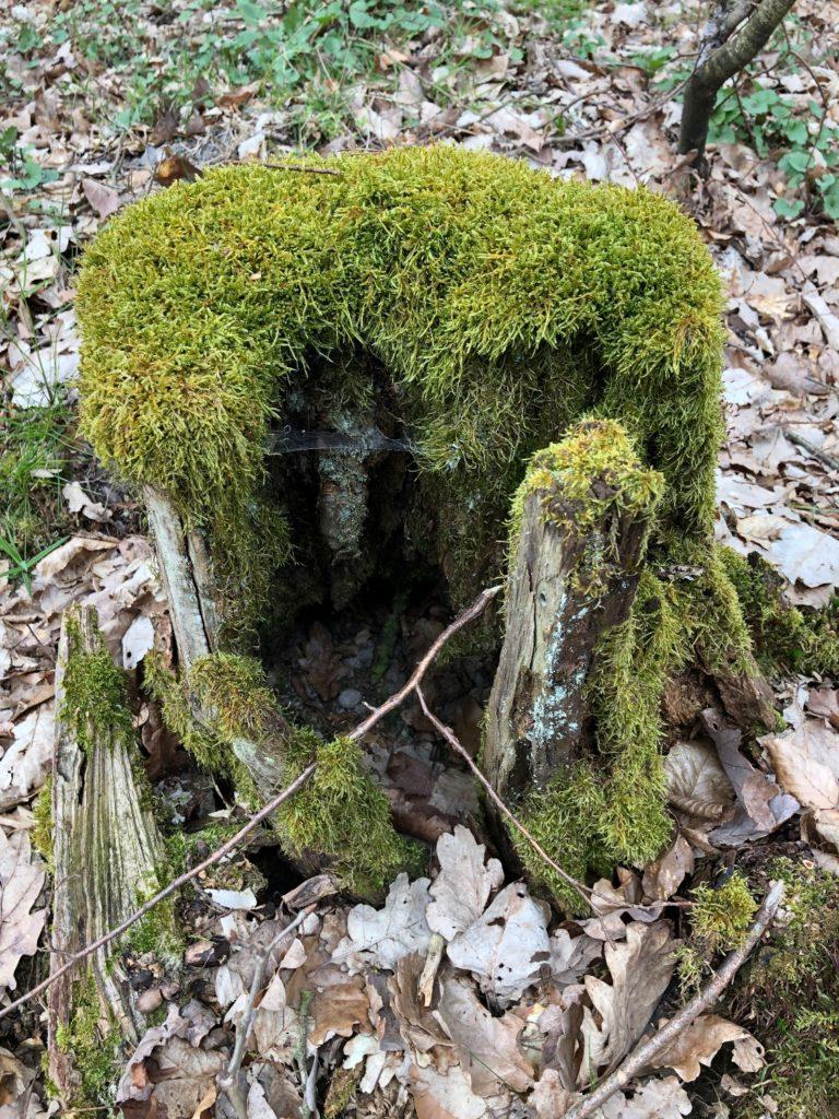 Entdeckungsspiel im Wald