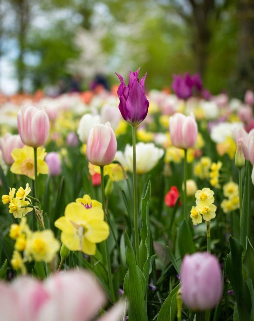 Wir suchen den Frühling