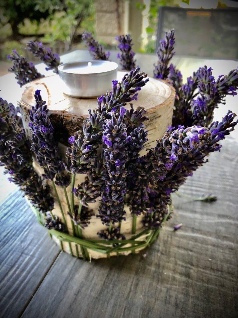Lavendel am Birkenstamm