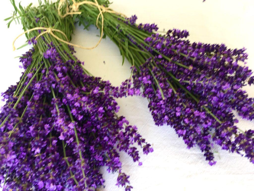 Lavendel schneiden und trocknen (Lavendelernte)