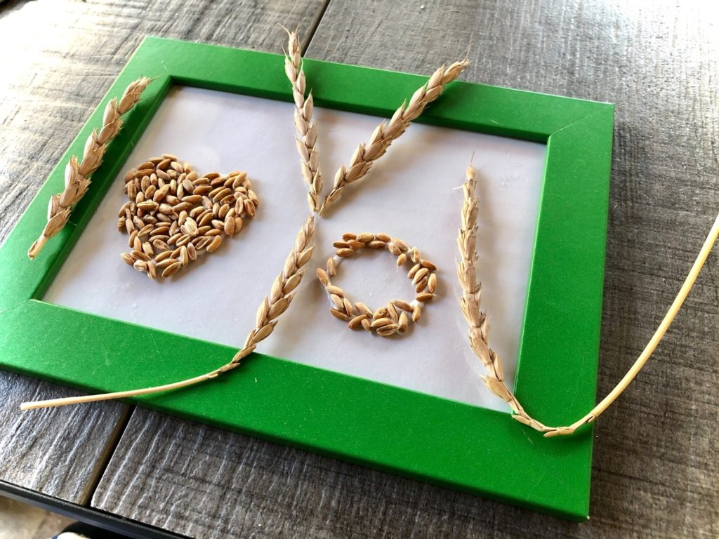 Getreide-Liebe