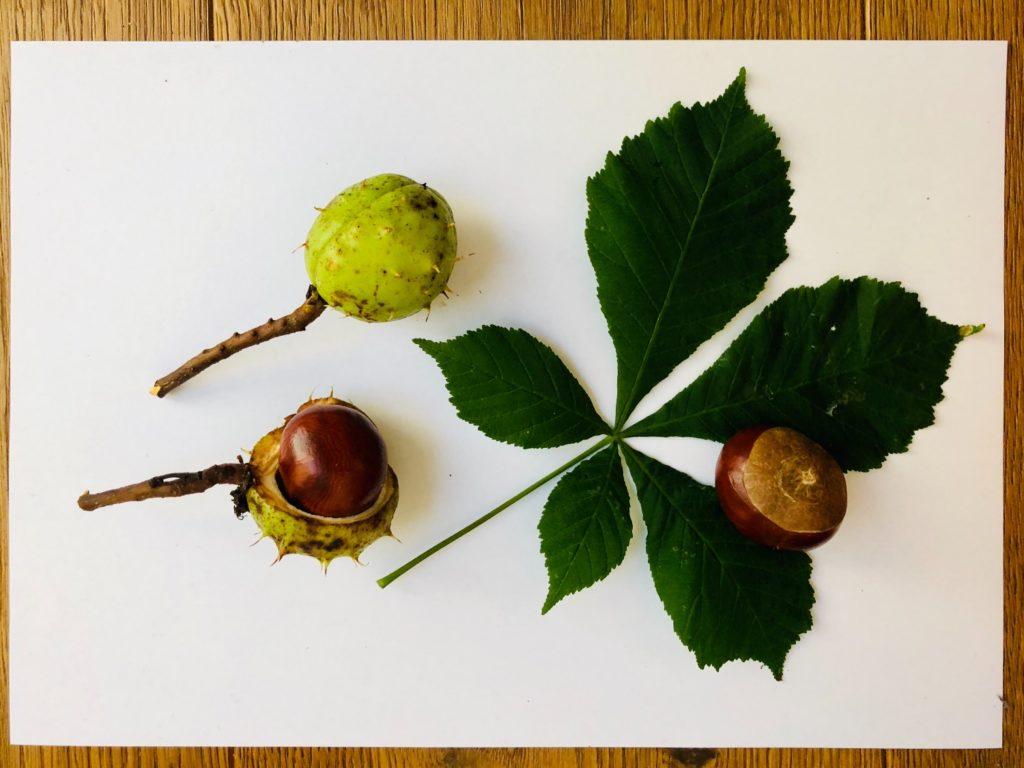 Herbst-Naturmaterial zuordnen