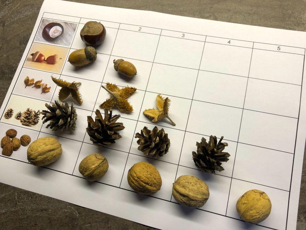 Sortier- und Zählspiel mit Naturmaterialien