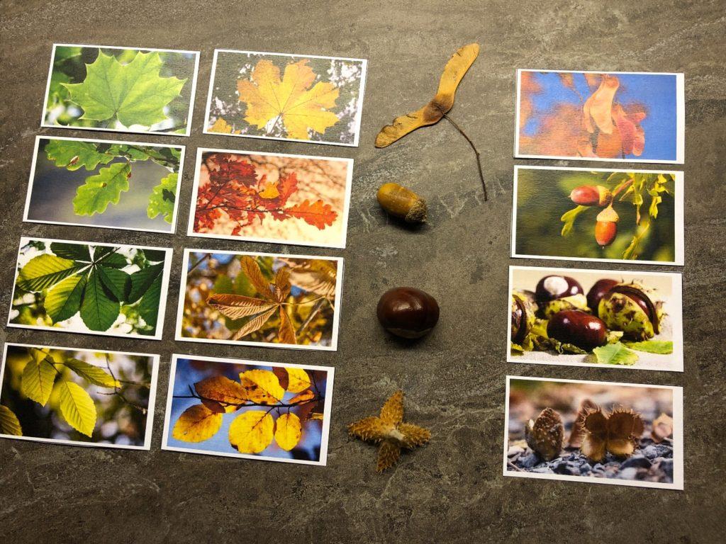 Herbstblätter + Früchte zuordnen (viele Varianten)
